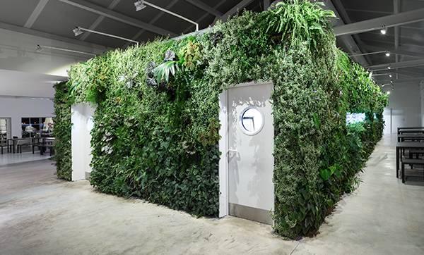 Levende plantenwand in binnenruimte
