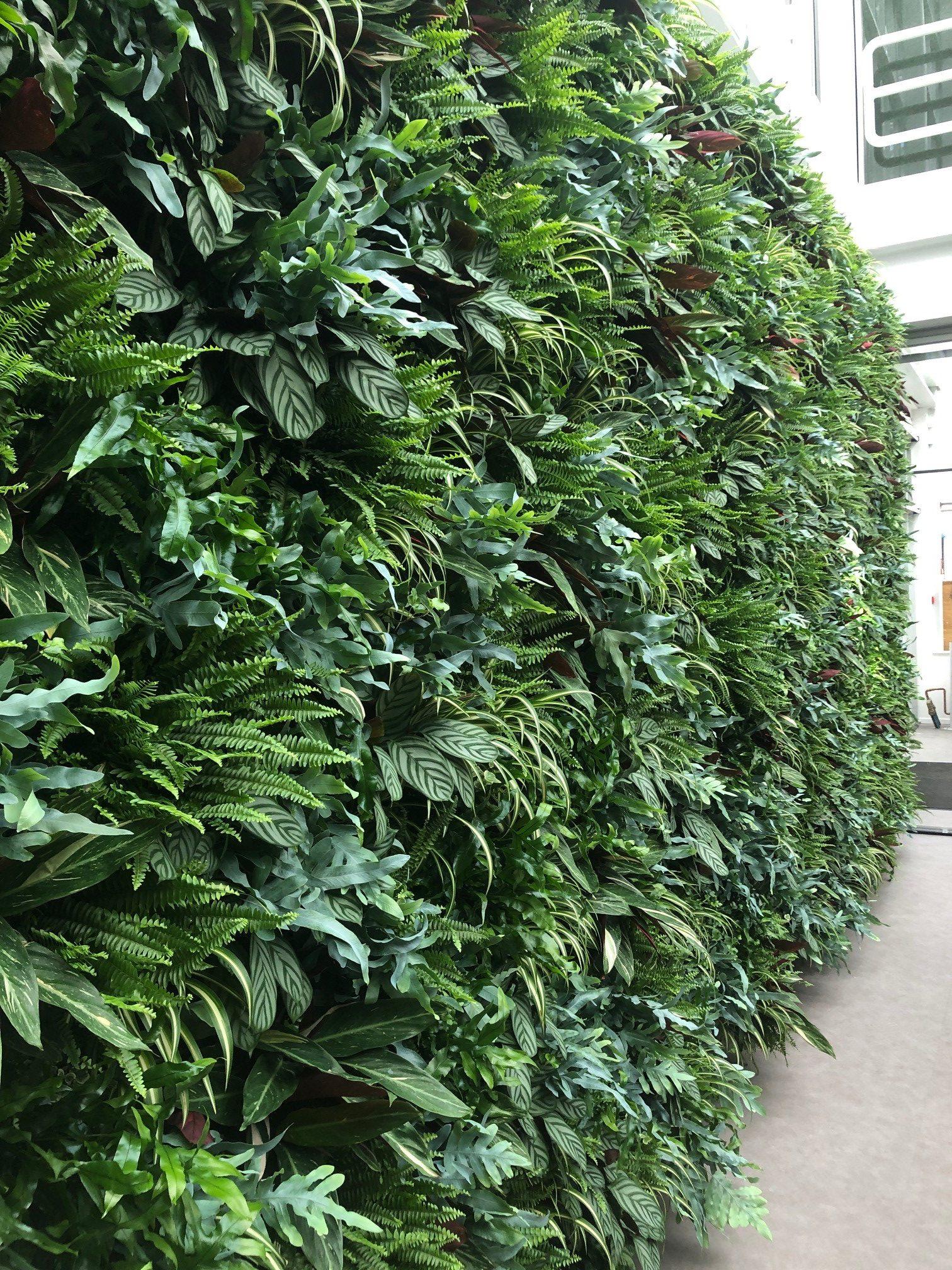 Groene wand met planten
