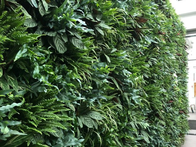 groene plantenwand