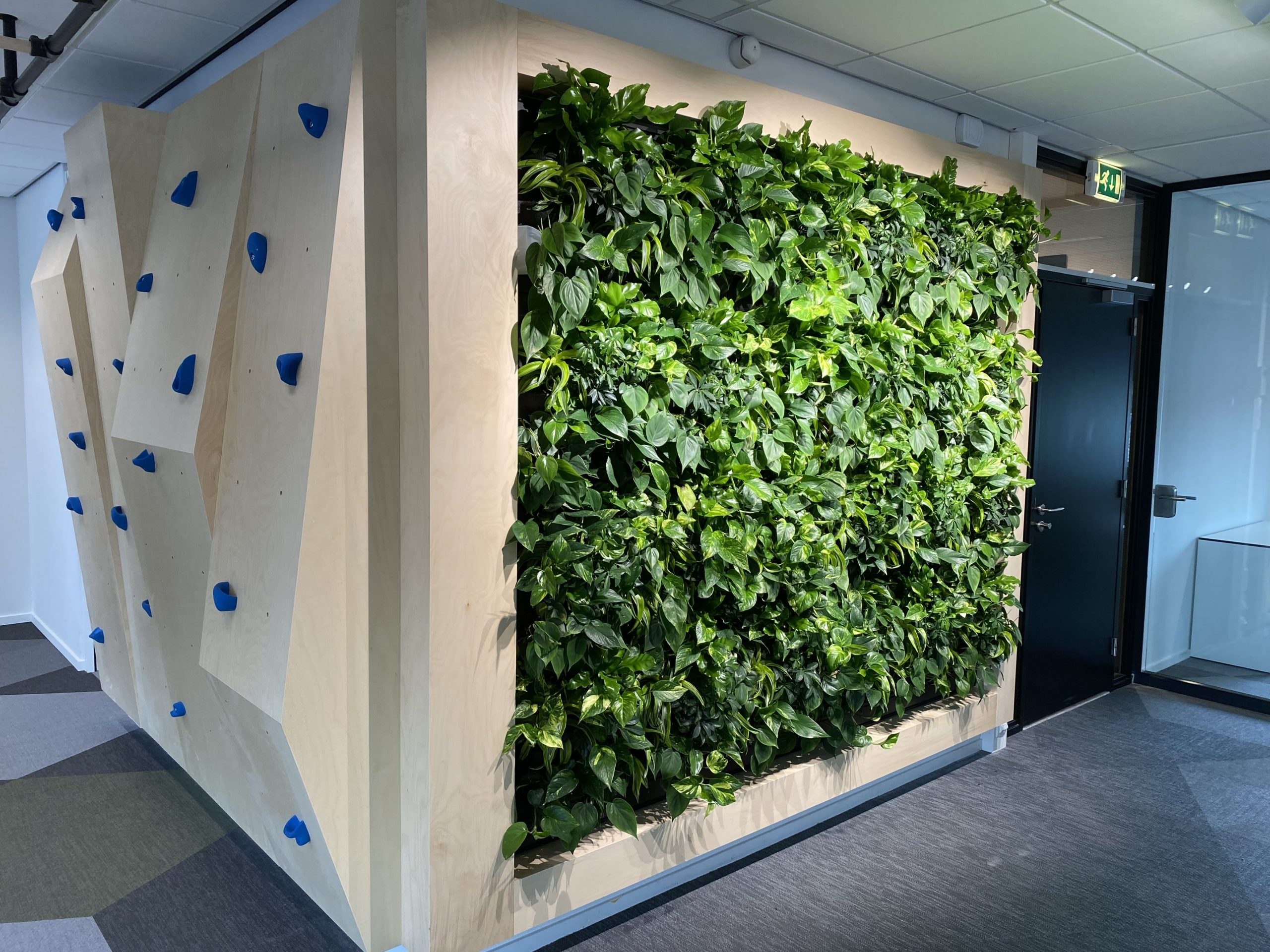 Groene plantenwand op kantoor